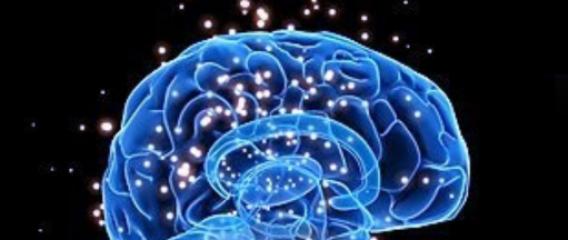 Logo Total Biology